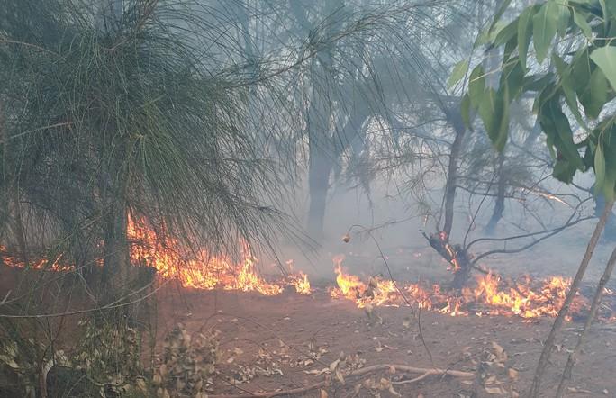 Phú Yên: Cháy hàng chục héc-ta rừng phòng hộ ven biển - Ảnh 1.