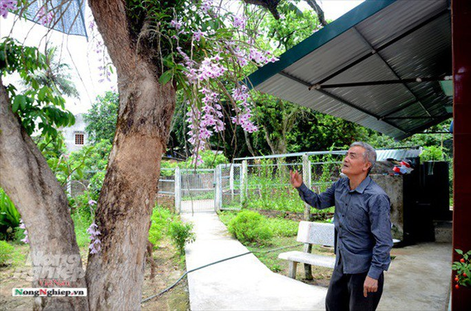Ngỡ ngàng với khu vườn lan cổ thụ ở Tuyên Quang - Ảnh 1.