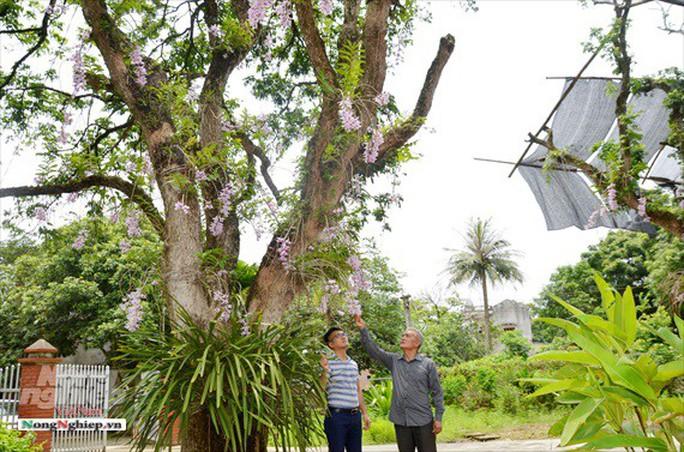 Ngỡ ngàng với khu vườn lan cổ thụ ở Tuyên Quang - Ảnh 7.