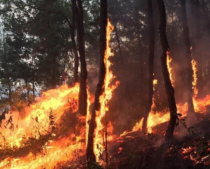 Người phụ nữ bị lửa thiêu khi chữa cháy rừng kinh hoàng ở Hà Tĩnh và Nghệ An - Ảnh 1.