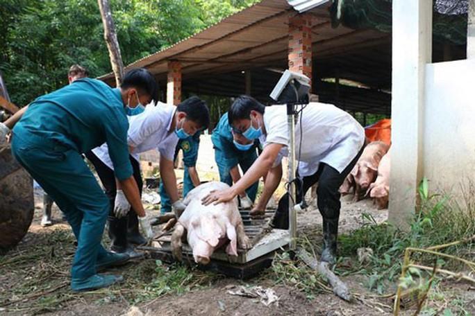 Cả ngàn tỉ đồng, dùng cả quỹ nâng lương để chống dịch tả lợn châu Phi - Ảnh 1.