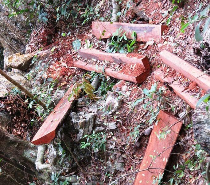 Vụ phá rừng ở VQG Phong Nha - Kẻ Bàng: Bắt, khởi tố một trạm trưởng - Ảnh 2.