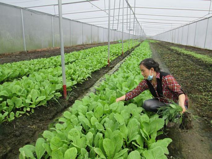 Nông nghiệp 4.0 gặp khó vì thủ tục đất đai - Ảnh 1.