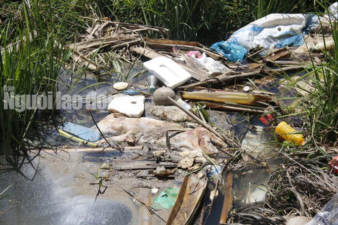 Quảng Nam: Giữa mùa dịch, xác heo thối vứt đầy kênh - Ảnh 13.