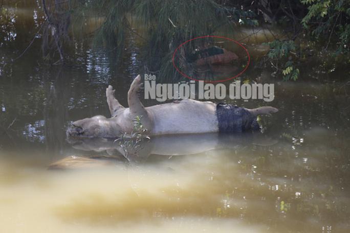 Quảng Nam: Giữa mùa dịch, xác heo thối vứt đầy kênh - Ảnh 10.