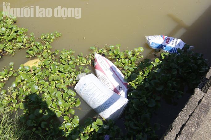Quảng Nam: Giữa mùa dịch, xác heo thối vứt đầy kênh - Ảnh 9.