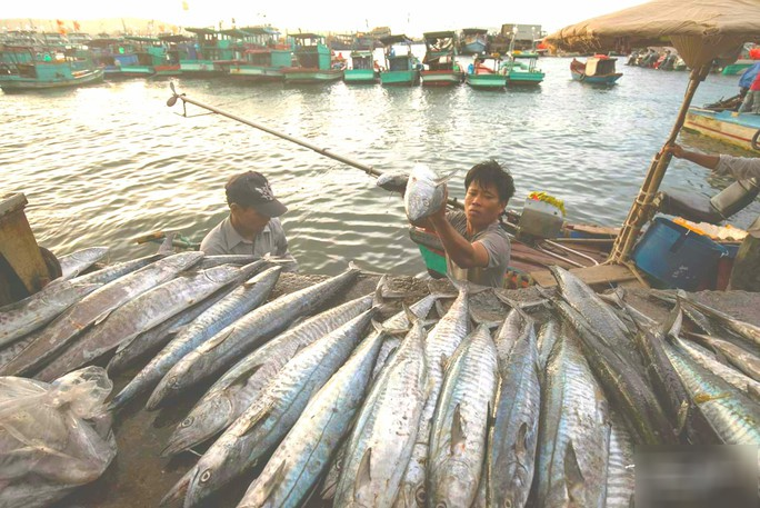 Mãn nhãn tại cảng cá lâu đời ở đảo ngọc Phú Quốc - Ảnh 5.