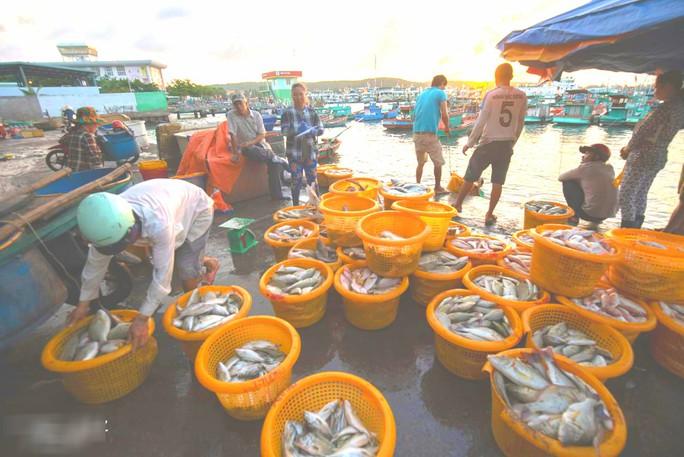 Mãn nhãn tại cảng cá lâu đời ở đảo ngọc Phú Quốc - Ảnh 6.