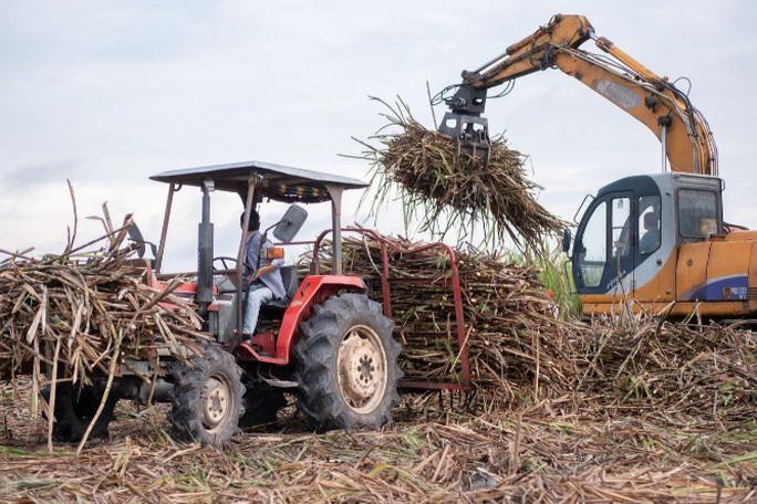 TTC Sugar hỗ trợ kịp thời, thiết thực cho người trồng mía  - Ảnh 1.