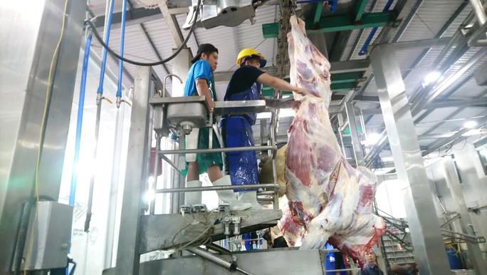 Thông tin thêm về vụ 1.600 con trâu bò Úc mất dấu tại Việt Nam - Ảnh 1.