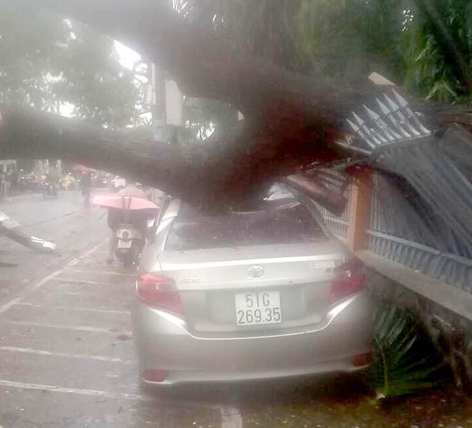 TP HCM: Cây xanh bật gốc đè ôtô, quận Tân Phú cúp điện - Ảnh 1.