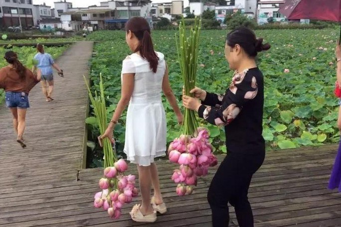 Ngỡ ngàng cảnh hàng trăm du khách Trung Quốc leo rào hái trộm hoa - Ảnh 1.