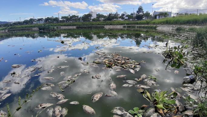 Đà Nẵng: Cá chết trắng, nổi xếp lớp tại hồ điều tiết Trung Nghĩa - Ảnh 5.