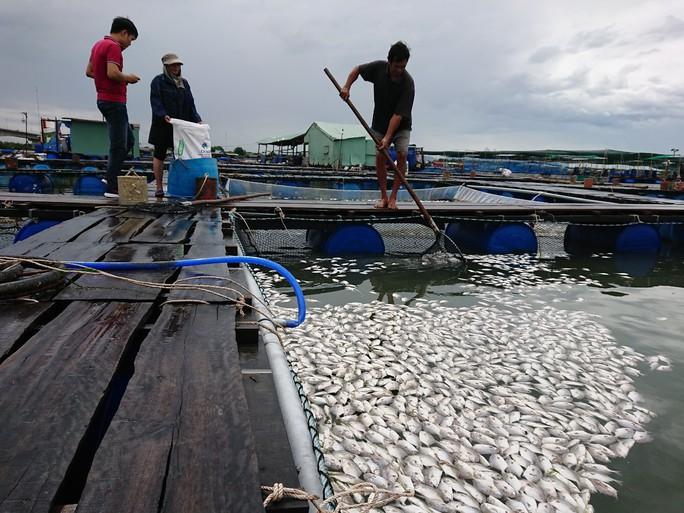 Cá nổi trắng bụng, ken cứng mặt nước sông Chà Và - Ảnh 3.