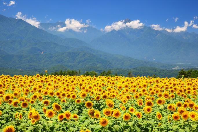 Đến Nhật Bản vào mùa lễ hội lớn nhất năm - Ảnh 4.