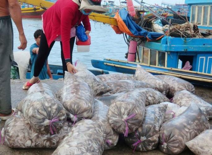 Bạch tuộc ắp ụ ở Vàm Láng, Gò Công Đông - Ảnh 4.