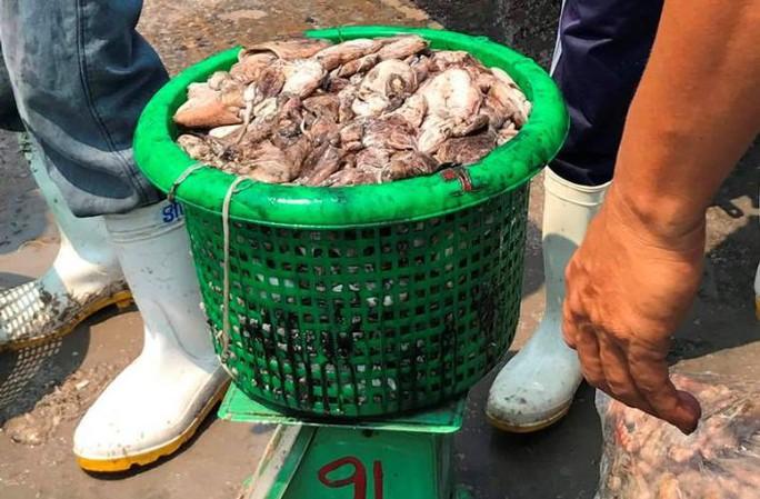 Bạch tuộc ắp ụ ở Vàm Láng, Gò Công Đông - Ảnh 6.