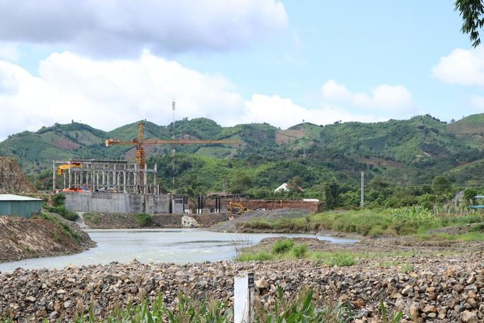Thủy điện Chư Pông Krông gây họa cho lúa - Ảnh 1.