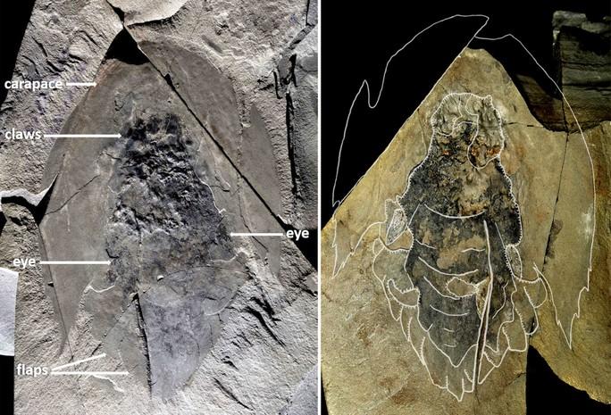 Quái vật 506 triệu tuổi trong mỏ đá y hệt… tàu vũ trụ - Ảnh 1.