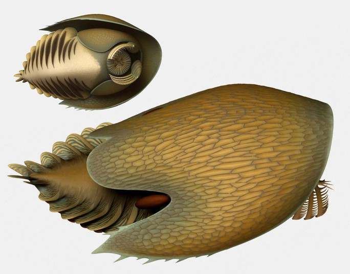 Quái vật 506 triệu tuổi trong mỏ đá y hệt… tàu vũ trụ - Ảnh 4.
