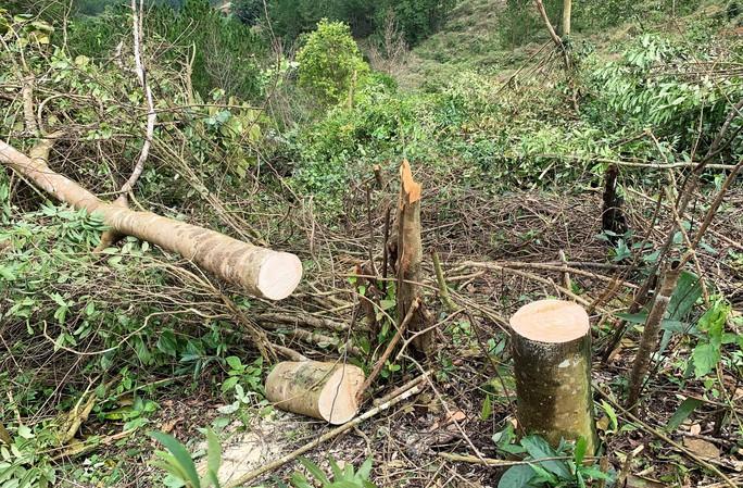 Ngang nhiên triệt hạ rừng phòng hộ chỉ cách Đà Lạt 5 km - Ảnh 3.