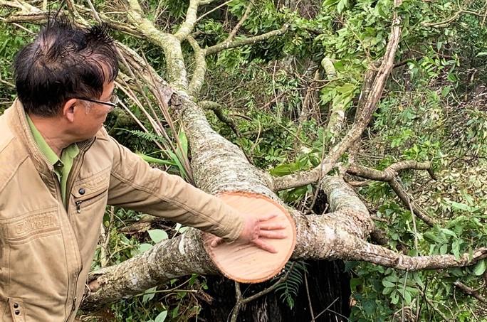Ngang nhiên triệt hạ rừng phòng hộ chỉ cách Đà Lạt 5 km - Ảnh 1.