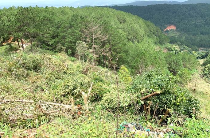 Ngang nhiên triệt hạ rừng phòng hộ chỉ cách Đà Lạt 5 km - Ảnh 4.