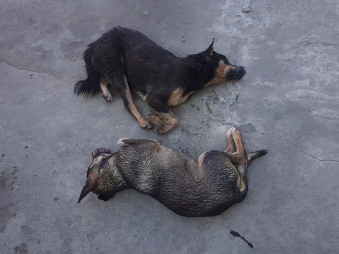Nửa đêm mang súng điện đi trộm chó, 2 thanh niên bị bắt giữ - Ảnh 2.