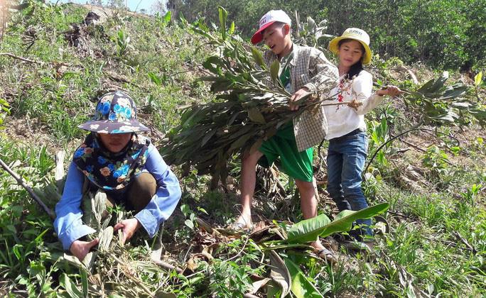 Chặt phá hàng ngàn cây keo tràm của người khác vì cho rằng trồng trên đất của mình - Ảnh 1.