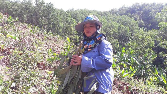 Chặt phá hàng ngàn cây keo tràm của người khác vì cho rằng trồng trên đất của mình - Ảnh 2.