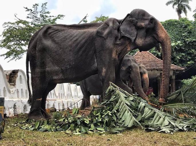Hình ảnh con voi gầy trơ xương gây chấn động cộng đồng mạng - Ảnh 1.