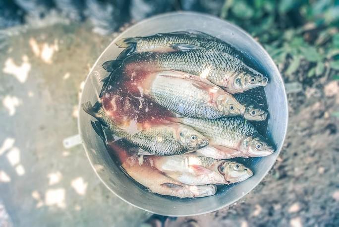 """Hóa chất biến cá ở Malaysia thành """"đồng tính"""" - Ảnh 1."""