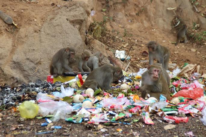 Chùm ảnh: Ngắm hành trình kiếm ăn của đàn khỉ xóm chùa trên núi Sơn Trà - Ảnh 2.