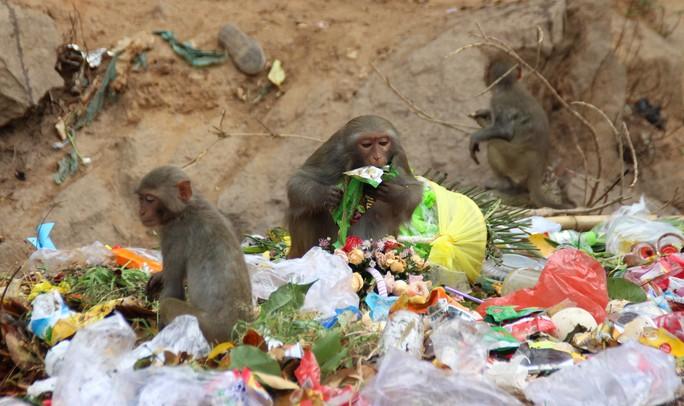 Chùm ảnh: Ngắm hành trình kiếm ăn của đàn khỉ xóm chùa trên núi Sơn Trà - Ảnh 4.