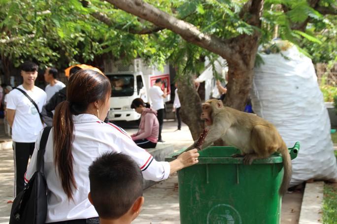 Chùm ảnh: Ngắm hành trình kiếm ăn của đàn khỉ xóm chùa trên núi Sơn Trà - Ảnh 7.