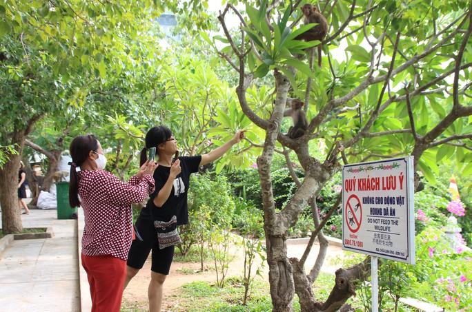 Chùm ảnh: Ngắm hành trình kiếm ăn của đàn khỉ xóm chùa trên núi Sơn Trà - Ảnh 9.