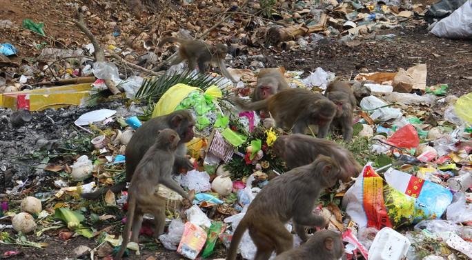 Chùm ảnh: Ngắm hành trình kiếm ăn của đàn khỉ xóm chùa trên núi Sơn Trà - Ảnh 10.