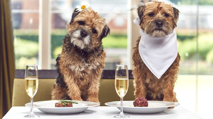 New York tổ chức tuần lễ nhà hàng phục vụ chó - Ảnh 2.
