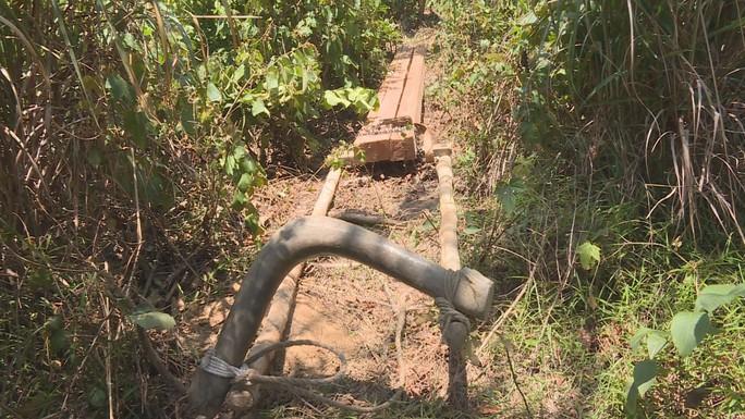 Điều công an khác địa bàn đi triệt phá đường dây khai thác gỗ lậu cực lớn - Ảnh 5.