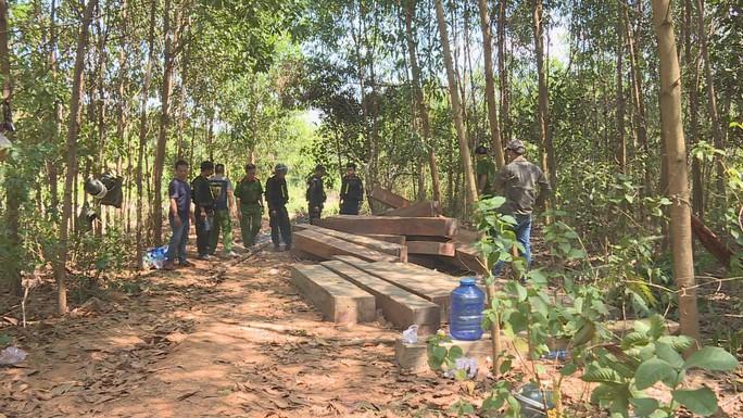 Điều công an khác địa bàn đi triệt phá đường dây khai thác gỗ lậu cực lớn - Ảnh 9.