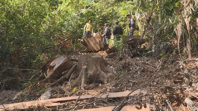 Điều công an khác địa bàn đi triệt phá đường dây khai thác gỗ lậu cực lớn - Ảnh 4.