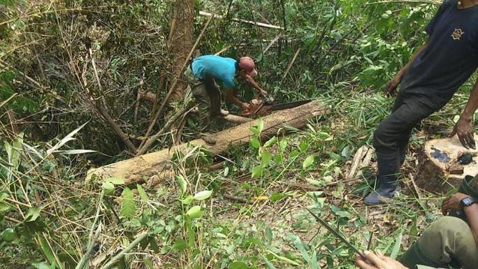 Chặt cây, xẻ gỗ và ngang nhiên qua trạm - Ảnh 1.