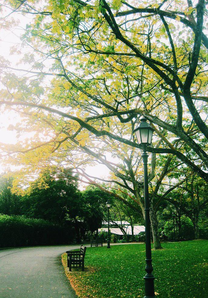 Từ mưa trong nhà đến nấc thang lên thiên đường, ra mà xem Singapore ngát xanh này! - Ảnh 12.