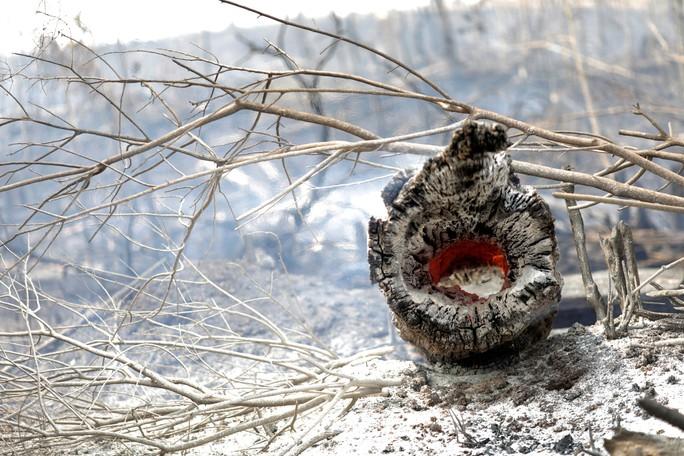 Cháy rừng Amazon: Cuộc khủng hoảng quốc tế - Ảnh 1.