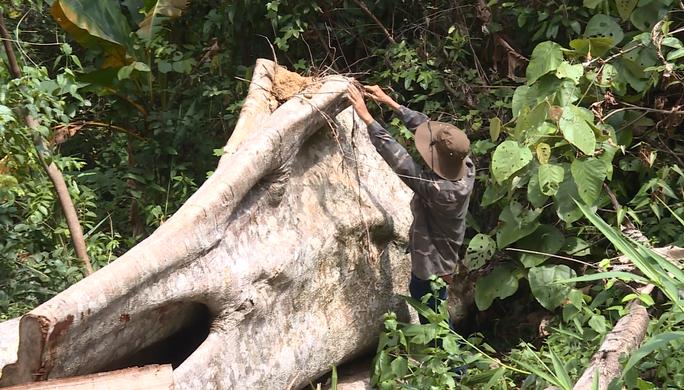 Điều công an khác địa bàn bắt gỗ lậu: Đột kích 5 điểm, thu thêm 230 m3 gỗ - Ảnh 2.