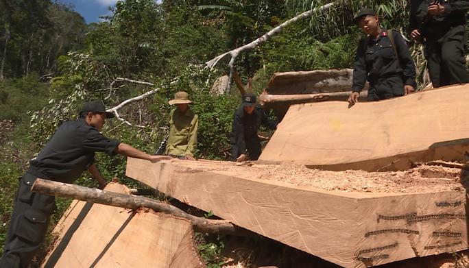 Điều công an khác địa bàn bắt gỗ lậu: Đột kích 5 điểm, thu thêm 230 m3 gỗ - Ảnh 4.