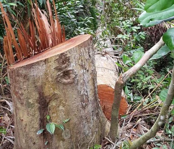 Điều công an khác địa bàn bắt gỗ lậu: Đột kích 5 điểm, thu thêm 230 m3 gỗ - Ảnh 10.