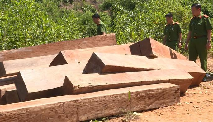 Công an khác địa bàn bắt đường dây gỗ lậu lớn - Ảnh 1.