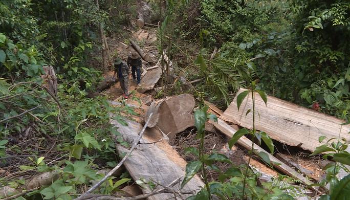 Điều công an khác địa bàn bắt gỗ lậu: Đột kích 5 điểm, thu thêm 230 m3 gỗ - Ảnh 11.