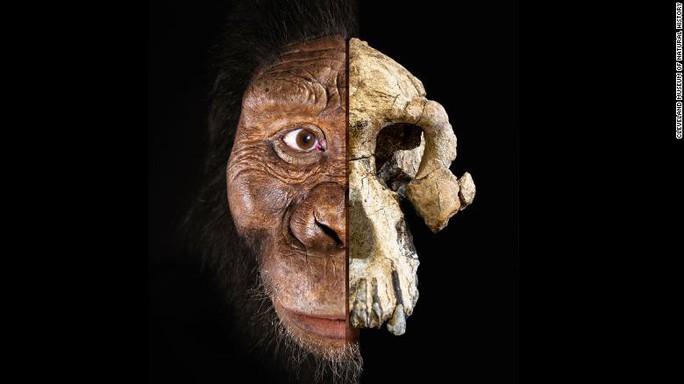 Phát hiện khuôn mặt mới của tổ tiên loài người 3,9 triệu tuổi - Ảnh 1.